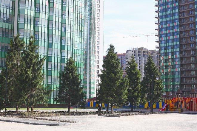 Setl City пересадила 38 взрослых елей из Полюстрово в Мурино
